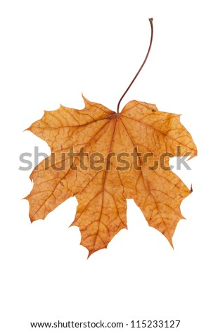 autumn leaf isolated over white