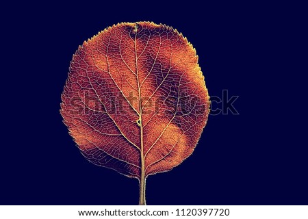 autumn leaf macro / leaf texture, design beautiful nature, yellow sunny autumn background #1120397720