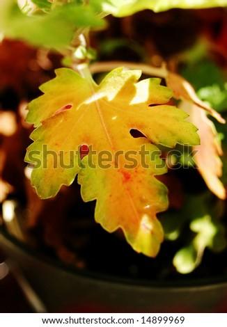 autumn leaf macro warm tones - stock photo