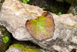 autumn leaf on a stone background close-up