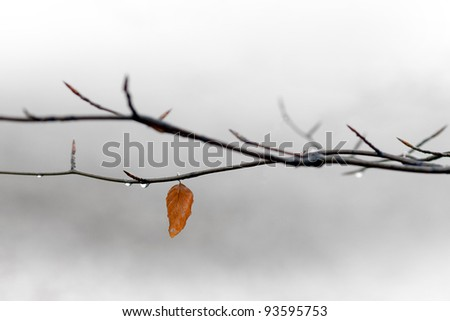 Autumn leaf on branch with raindrop on gray background