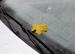 Autumn leaf on car windshield wet from rain. Yellow maple leaf on vehicle window during fall storm or rainy weather in october or november. Autumn season concept