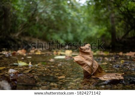Autumn leaf resting in a creak bed. Foto d'archivio ©