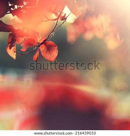 autumn leaf sunny background