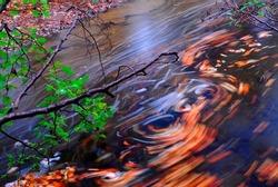 Autumn leaf swirls in a river