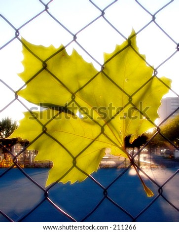 Autumn leaf under a net in urban scene with ambience touch