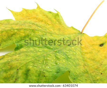 Autumn leaf with a water drops