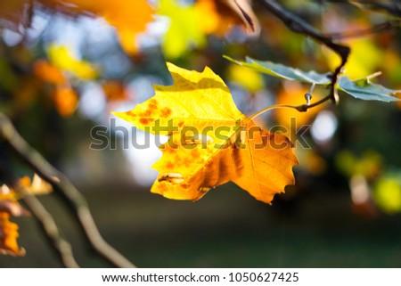 autumn Leaf with fall  #1050627425