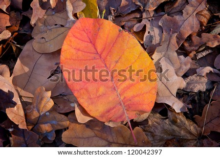 Autumn leafage abstract natural background