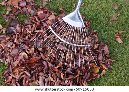 Autumn leafs and rake on grass lawn