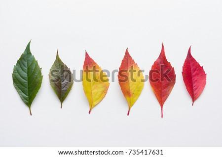 Autumn leafs colorful rainbow color gradient summer autumn season change concept  #735417631