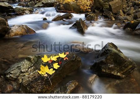 autumn leafs composition