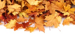 autumn leafs isolated