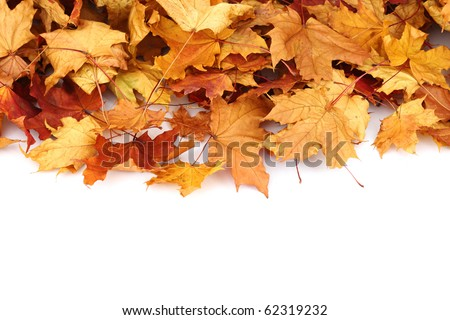 autumn leafs isolated #62319232