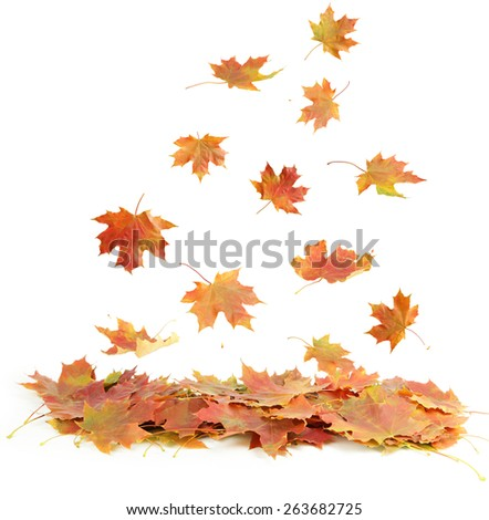 Autumn leafs isolated on white #263682725