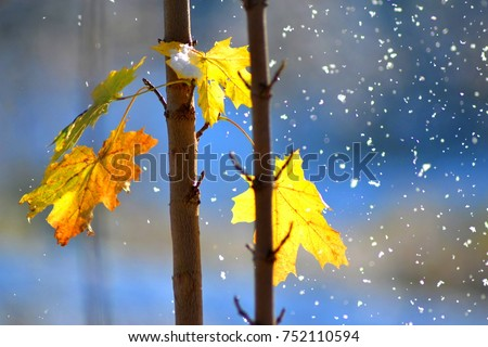autumn leafs with snowflakes - Shutterstock ID 752110594