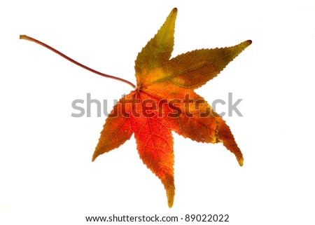 Autumn leave isolated at the white background