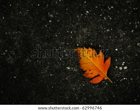Autumn Leave on Concrete