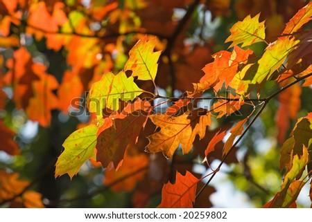 Autumn leaves #20259802