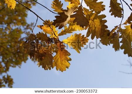 Autumn leaves Zdjęcia stock ©
