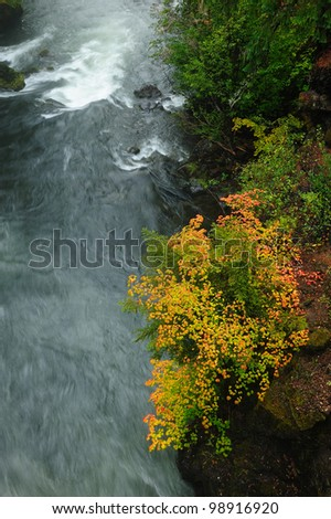 autumn leaves above running creek in Rogue Gorge area, oregon, usa