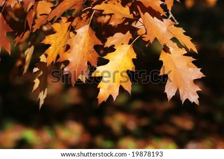Autumn leaves, abstract autumn background
