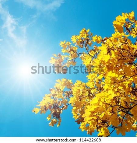 Autumn leaves against the blue sky and sun