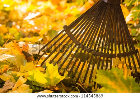 Autumn leaves and a rake on back-light, horizon format
