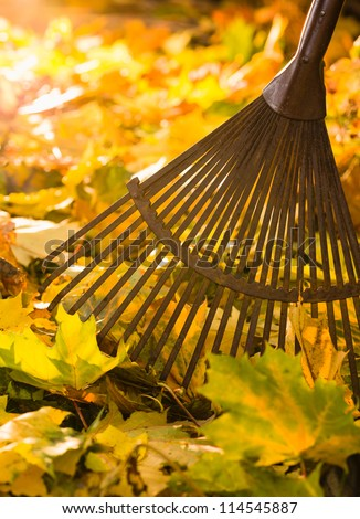 Autumn leaves and a rake on back-light, vertical format