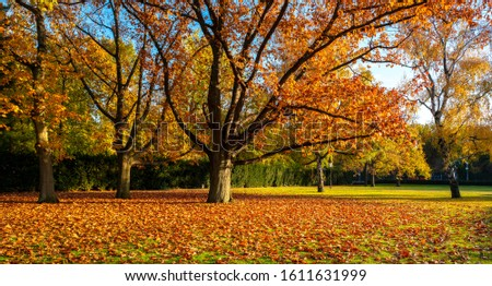 Autumn leaves and autumn trees in a park in Berlin, Germany