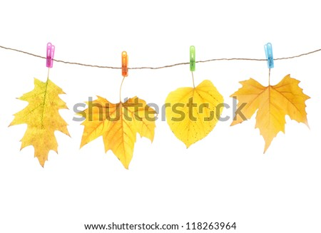 Autumn leaves and clothes pegs, isolated on white #118263964