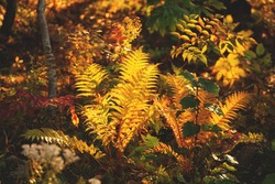 Autumn Leaves and Fall Trees at Sunset. Fern leaves background