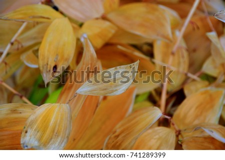 Autumn leaves and fallen leaves #741289399