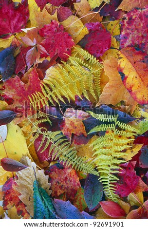 Autumn leaves and ferns in studio setting