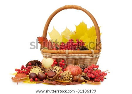 Autumn leaves and fruits isolated on white
