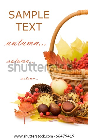 Autumn leaves and fruits isolated on white background