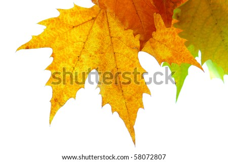 Autumn leaves and white background