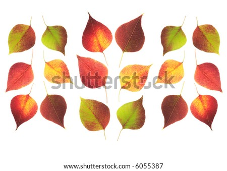 Autumn leaves arranged on white background