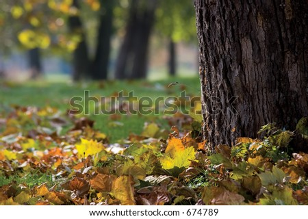 Autumn leaves at base of tree