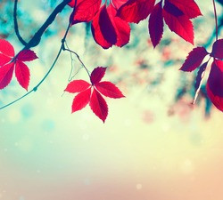 Autumn leaves background. Beautiful Fall. Nature. Colorful autumnal leaf over blurred background. Beauty Autumn scene