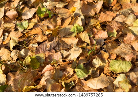 Autumn leaves background. Dry leaves background. Autumn leaves texture.