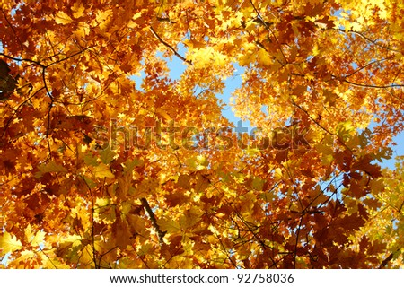 Autumn leaves, Background from autumn leaves