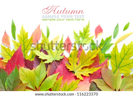Autumn leaves background isolated on white with sample text