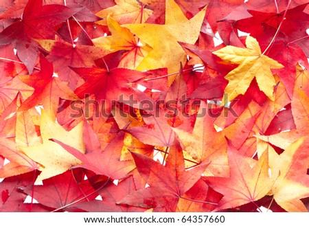 Autumn leaves background. Multicolored pattern.