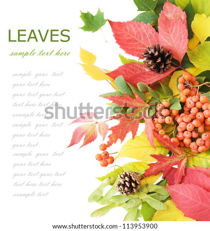Autumn leaves background with cone and berry isolated on white with sample text