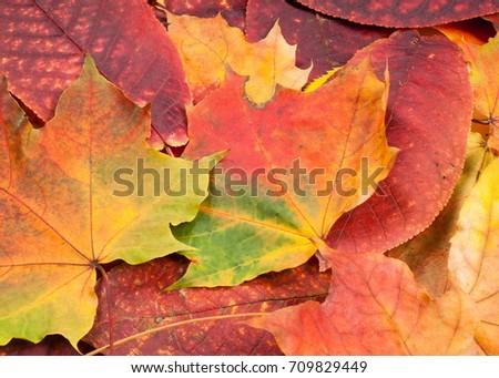 Autumn Leaves. Beautiful photos of autumn. The colors of autumn leaves