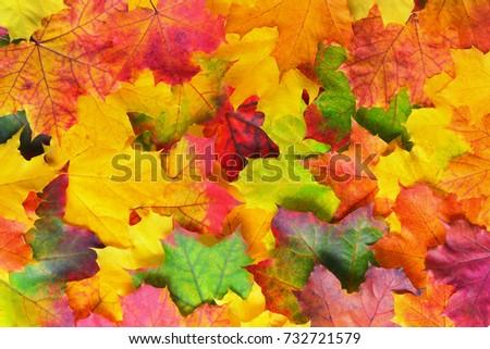 autumn leaves border on white background season natural bright