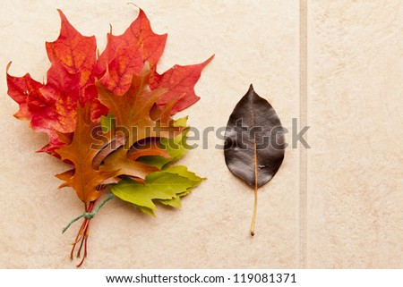 Autumn leaves bouquet on stone background.