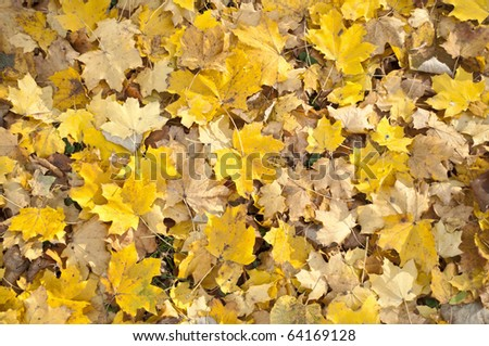 Autumn leaves - close up shot -