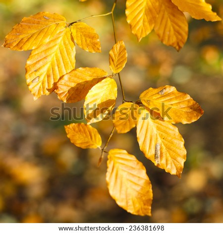 Autumn Leaves Colorful Forest Background/Autumn Leaves Colorful Forest Background